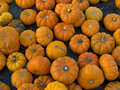Free Small Pumpkins Royalty Free Stock Photo - 9406245