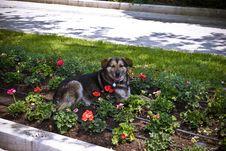 Free A Cute Dog Stock Photo - 9403500