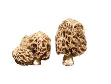 Free Morels Stock Photos - 9403843