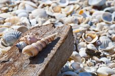 SeaShell Series 10 Stock Images