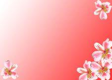 Free Flowers On A Red Background Stock Photos - 9405193