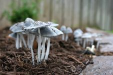 Free Mushrooms Royalty Free Stock Photos - 9405278
