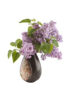 Free Lilac In Vase Stock Images - 9406104
