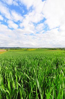 Free Field In Spring Royalty Free Stock Photos - 9406168