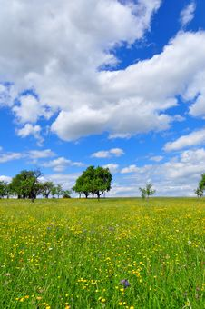 Free Meadow In Spring Royalty Free Stock Images - 9406539