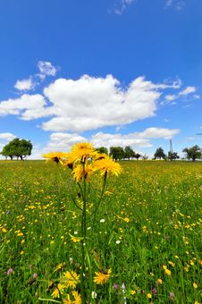 Free Meadow In Spring Stock Image - 9406701