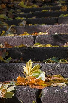 Free Dead Leafes On Stone Stairpath Stock Images - 9408114