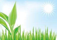 Free Green Stock Image - 9408141