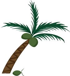 Free Coconut Tree Stock Images - 9409464