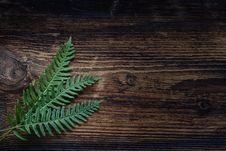 Free Green, Leaf, Wood, Texture Royalty Free Stock Photo - 94001645
