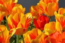 Free Flower, Flowering Plant, Yellow, Plant Stock Photo - 94002950