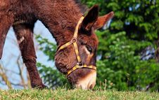 Free Donkey, Fauna, Wildlife, Horse Like Mammal Stock Photos - 94004503