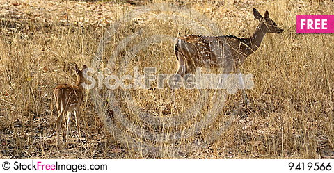 Free Mother Deer And Fawn Royalty Free Stock Image - 9419566