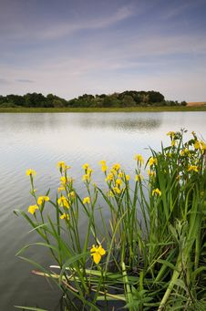 Free Scene From The Lake Royalty Free Stock Image - 9410506