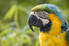 Free Parrot Stock Photos - 9411353