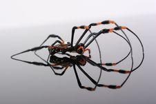 Free Spider Royalty Free Stock Photos - 9412608