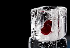 Free Cranberry And Ice Royalty Free Stock Images - 9414339
