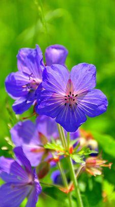 Free Bell Flower Stock Photo - 9414590