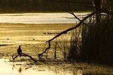 Free Bird Silhouette Stock Photos - 9415653