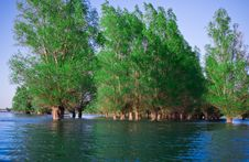 Danube Delta Flooded Forest Royalty Free Stock Images