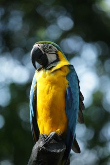 Free A Portrait Shot Of A Parrot Stock Image - 9417501