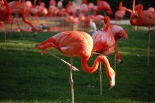 Free Flamingos Stock Photos - 9417783