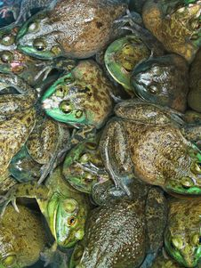 Free Frogs Royalty Free Stock Images - 9418029