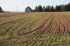 Free Grain Field Royalty Free Stock Photos - 9418188