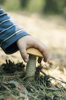 Free Mushroom Is In A Hand Royalty Free Stock Photo - 9418645