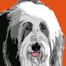 Free Sheepdog Portrait Stock Photos - 9418833
