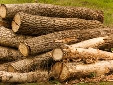 Free Heap Of Logs Stock Images - 9419084