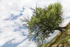 Free Tree Stock Image - 9419251