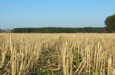 Free Stubble Field Royalty Free Stock Images - 9419569