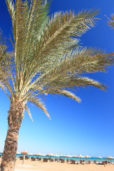 Blue Sky, Palm And Umbrellas Stock Photography
