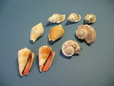 Free Shells Royalty Free Stock Images - 9419949
