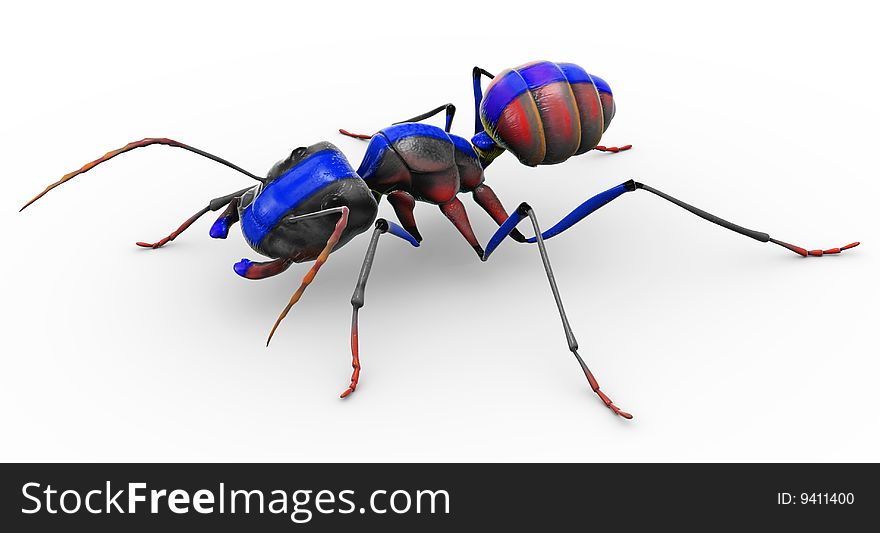 Painted Ant Looking Pretty