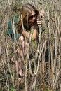 Free Girl Among Bushes Royalty Free Stock Image - 9429496