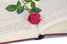 Free Book And Rose. Royalty Free Stock Photo - 9421705