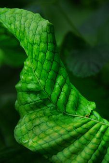 Free Curled Leaf Royalty Free Stock Photo - 9421995