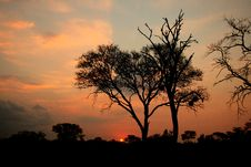 Free African Sunset, Sabi Sand Reserve Royalty Free Stock Photo - 9422335