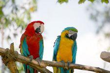 Free Parrots Stock Photo - 9422510
