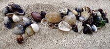 Free Hawaiian Shells In The Sand Royalty Free Stock Image - 9423436