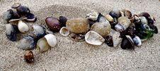 Hawaiian Shells In The Sand Royalty Free Stock Image
