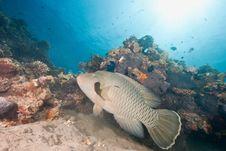 Free Ocean, Sun And Napoleonfish Stock Photography - 9425092