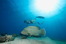 Free Ocean, Sun , Napoleonfish And A Freediver Royalty Free Stock Photos - 9425158