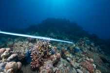 Free Ocean, Sun And Cornetfish Royalty Free Stock Photography - 9425197