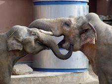 Free Elephant S Love Stock Photo - 9425720