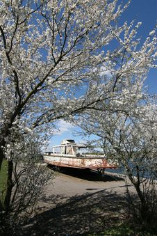 Free Blossoming Tree And Old Motorboat Stock Photography - 9426302