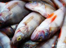 Free Fresh Fish Stock Photos - 9426313