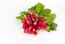 Free Fresh Radish Bunch Royalty Free Stock Photography - 9426317